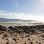 Sonnen mit den hawaiianischen Mönchsrobben – Kaena