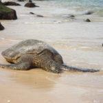 Wo kannst Du Meeresschildkröten von Nahem betrachten?