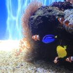 Waikiki Aquarium – etwas für die kleinen aber auch viel für die großen Unterwasserwelt-Entdecker
