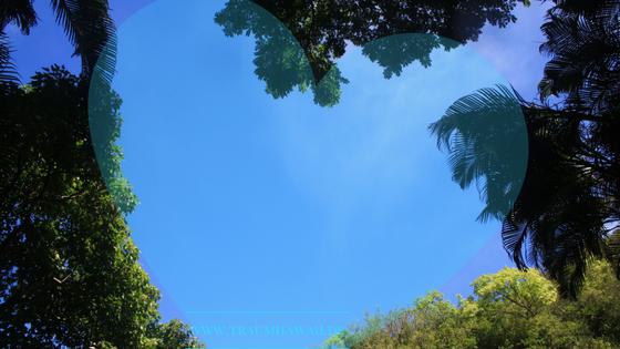 Herz auf Palmenkronen
