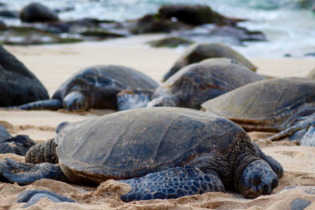 Interview Janina|ferntastisch: Schildkröten Maui