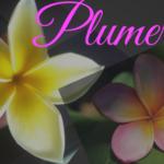Hawaiianische Mythen und Legenden – Blogreihe Teil 2 – Die Legende der Plumeria