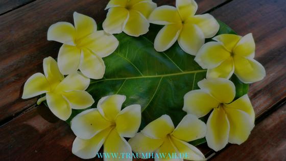 Traditionen von Hawaii